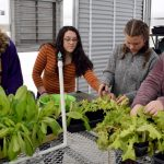 Four female high school students work with plants
